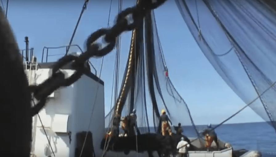 peche filet marins - 2