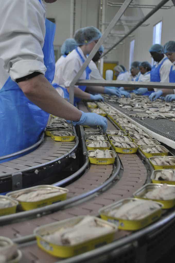 vues usines maquereau - 1