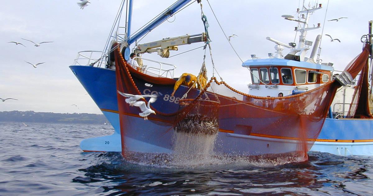 Pêche - Conserve de Poisson